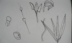 Alhaurin el Grande Drawing